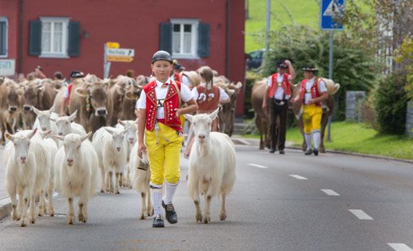 Alpabzug_urnaesch-cows-Brian-Opyd-Photography.jpg